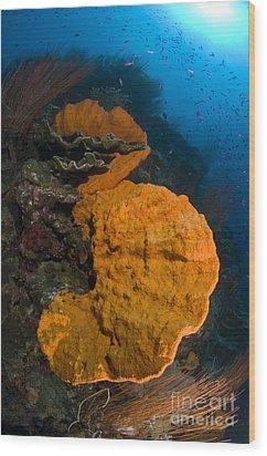 Bright Orange Sponge With Sunburst Wood Print by Steve Jones