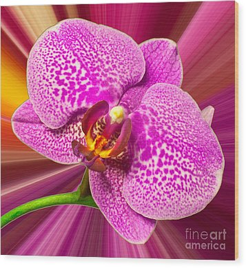 Wood Print featuring the photograph Bright Orchid by Michael Waters