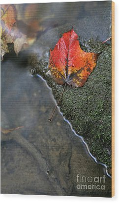 Bright Red Leaf Near A Stream Wood Print by Chris Hill