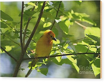 Bright Yellow Songbird Wood Print by Christina A Pacillo