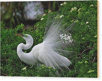 Brilliant Feathers Wood Print