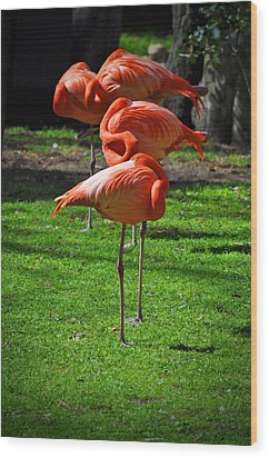 Brilliant Flamingos Wood Print by Mary Machare