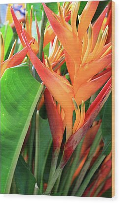 Brilliant Heliconia Wood Print by Karen Nicholson