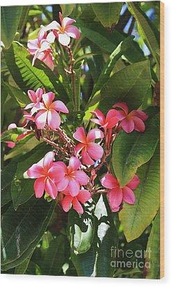Brilliant Pink Plumaria Wood Print by Craig Wood