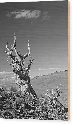 Bristlecone Pine And Cloud Wood Print