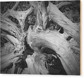 Bristlecone Pine Roots White Mountains Ca Wood Print by Troy Montemayor
