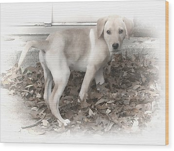 British Labrador In Natural Tones Wood Print by Linda Phelps