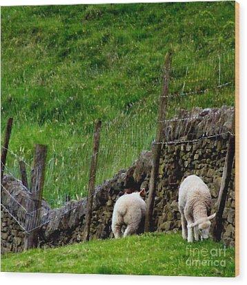 British Lamb Wood Print by Isabella F Abbie Shores