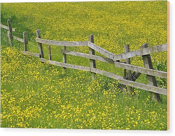 Broken Fence And Buttercup Field Wood Print by Photos by R A Kearton