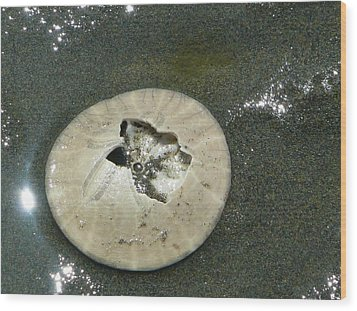 Broken Sand Dollar Wood Print by Lori Seaman