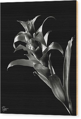 Wood Print featuring the photograph Bromeliad In Black And White by Endre Balogh