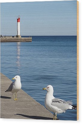 Wood Print featuring the photograph Bronte Lighthouse Gulls by Laurel Best