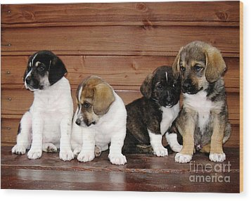 Brothers Puppies Wood Print by AmaS Art