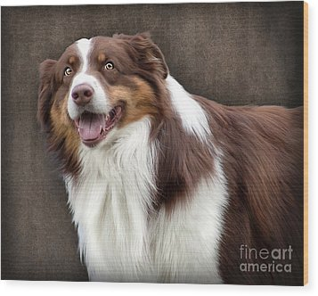 Brown And White Border Collie Dog Wood Print