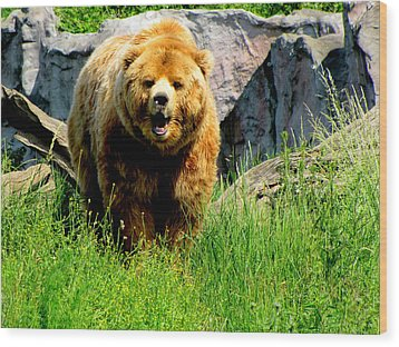 Wood Print featuring the photograph Brown Bear by Barbara Walsh