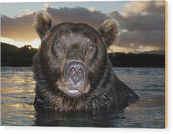 Brown Bear Ursus Arctos In River Wood Print by Sergey Gorshkov
