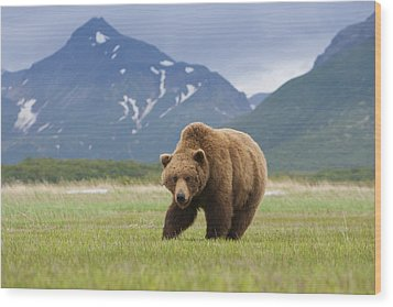 Brown Bears, Katmai National Park, Alaska, Usa Wood Print by Mint Images/ Art Wolfe