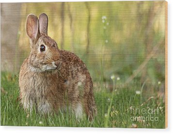 Wood Print featuring the photograph Brown Bunny by Denise Pohl