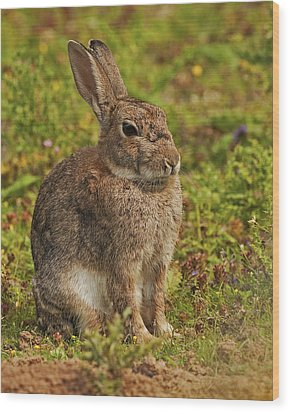 Wood Print featuring the photograph Brown Hare by Paul Scoullar