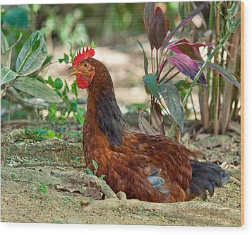Wood Print featuring the photograph Brown Hen by Susi Stroud