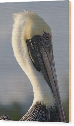 Brown Pelican Profile Wood Print