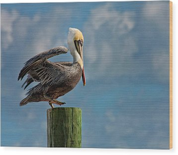 Brown Pelican Ready To Fly Wood Print by Sandra Anderson