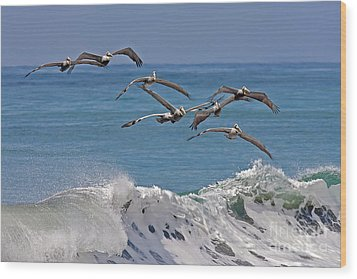 Brown Pelicans Wood Print