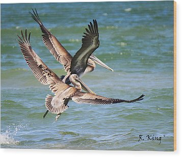 Brown Pelicans Taking Flight Wood Print