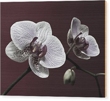 Brown Purple White Orchids Flower Macro - Flower Photograph Wood Print by Artecco Fine Art Photography