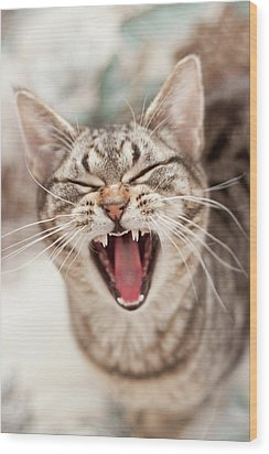 Brown Tabby Cat Yawning And Showing Teeth Wood Print by Kathryn Froilan