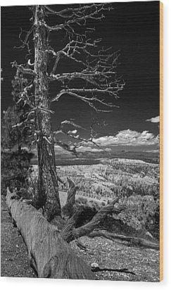 Bryce Canyon - Dead Tree Black And White Wood Print
