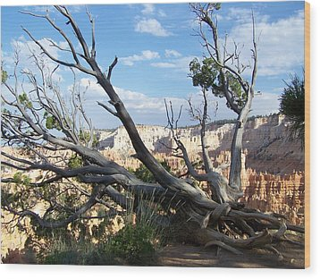 Bryce Canyon Wood Print by Dany Lison