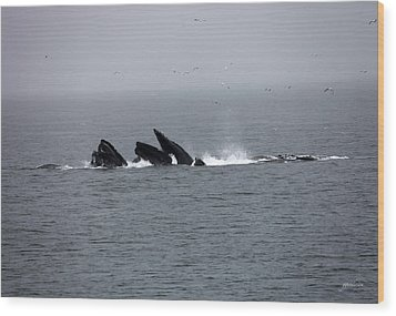 Bubble Netting Whales In Alaska Wood Print by Gary Gunderson