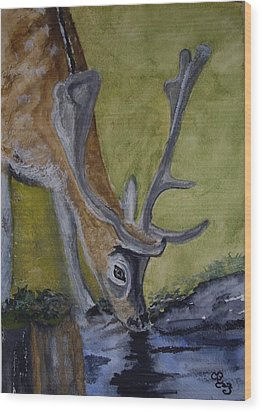 Buck At Bushy Park Wood Print