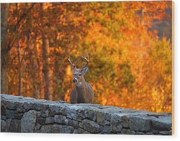 Buck In The Fall 01 Wood Print by Metro DC Photography