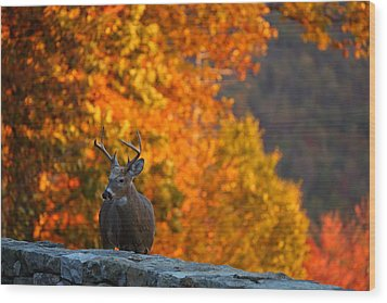 Buck In The Fall 02 Wood Print by Metro DC Photography