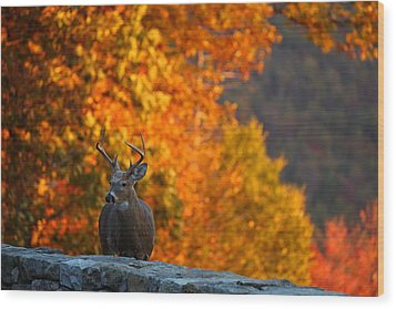 Buck In The Fall 03 Wood Print by Metro DC Photography