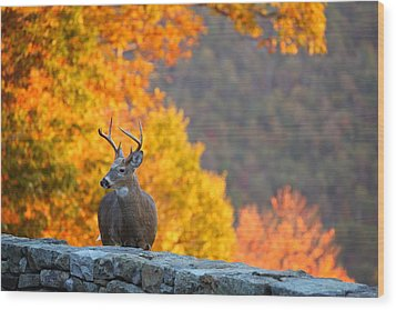 Buck In The Fall 04 Wood Print by Metro DC Photography