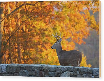 Buck In The Fall 05 Wood Print by Metro DC Photography