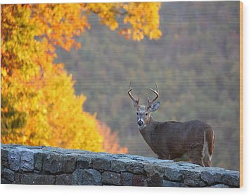 Buck In The Fall 08 Wood Print by Metro DC Photography