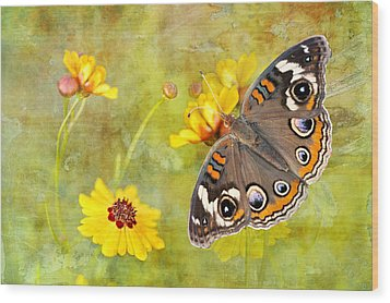 Buckeye Butterfly In The Meadow Wood Print by Bonnie Barry
