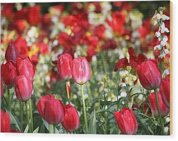 Buckingham Tulips Wood Print by Carrie OBrien Sibley
