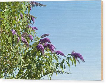 Buddleia Against Blue Sky Wood Print by Adrian Burke