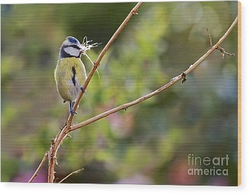 Wood Print featuring the photograph Bue Tit. by Gary Bridger