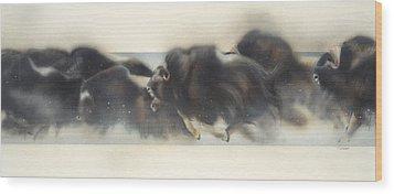 Buffalo In Winter Wood Print by Douglas Fincham