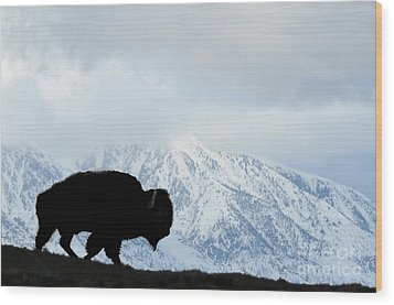 Wood Print featuring the photograph Buffalo Suvived Another Yellowstone Winter by Dan Friend