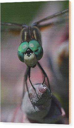 Bug Eater Wood Print by Charles Dana