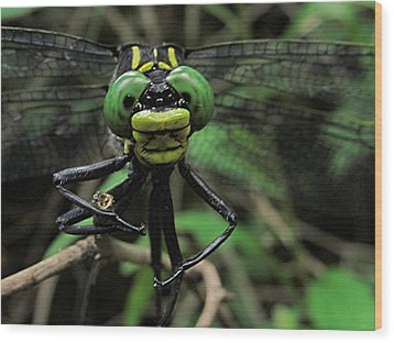 Wood Print featuring the photograph Bug-eyed by Doug McPherson