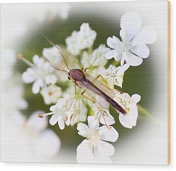 Bug On White Wood Print by Maureen  McDonald
