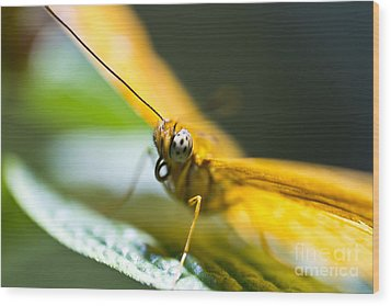 Wood Print featuring the photograph Bug Out by Leslie Leda